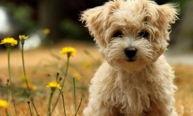 Τεστ: Μάθε τι σκύλος σου ταιριάζει ανάλογα με το χαρακτήρα σου!