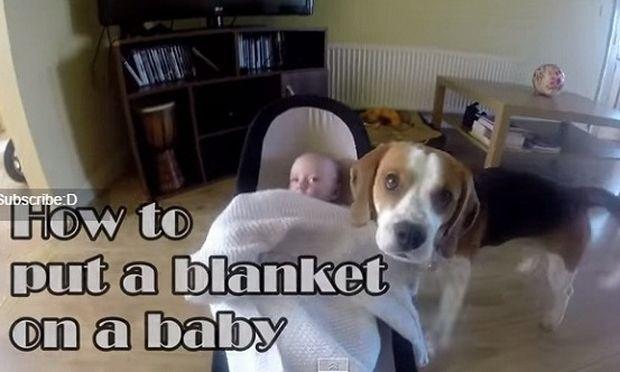 Δείτε γιατί αυτό το αξιαγάπητο σκυλί είναι καλύτερο κι από μπέιμπι σίτερ! (βίντεο)