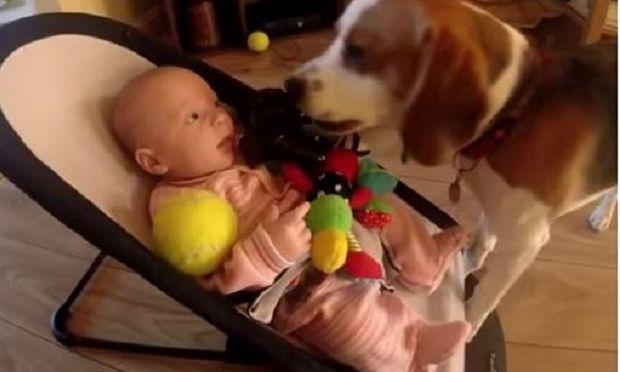 Αυτός ο σκύλος εκφράζει την αγάπη του στο μόλις λίγων μηνών μωράκι με τον πιο γλυκό τρόπο! (βίντεο)
