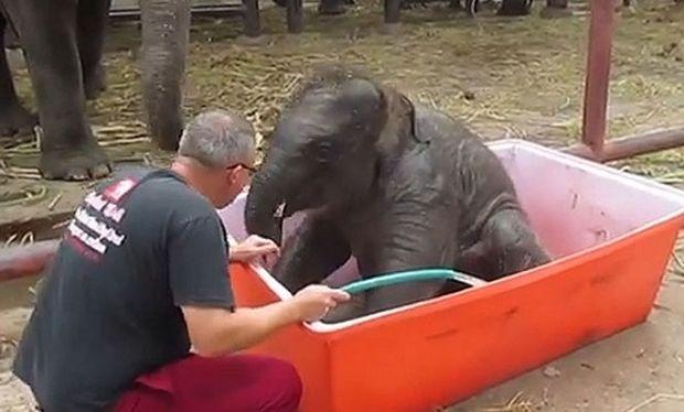 Φανταστικό: Δείτε μωρό ελεφαντάκι να κάνει μπάνιο! (βίντεο)