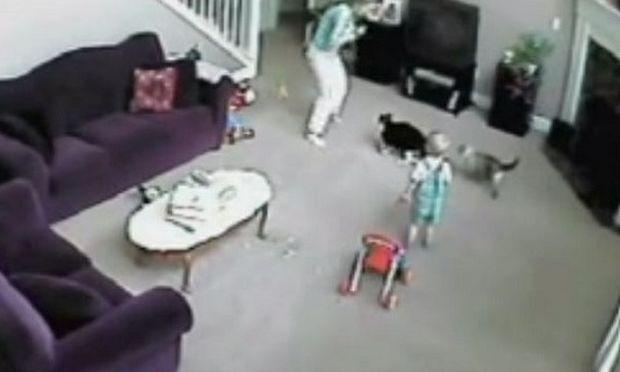 Γάτα επιτέθηκε στη μαμά για να σώσει ένα δίχρονο αγόρι!(βίντεο)