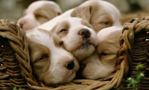 Τεστ για φιλόζωους: Τι σκυλί πρέπει να πάρεις;