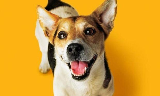 Ιούνιος, ο μήνας στοματικής φροντίδας PEDIGREE® DENTASTIX® Δωρεάν Οδοντικοί  Έλεγχοι από 220+ κτηνιάτρους,  σε όλη την Ελλάδα!