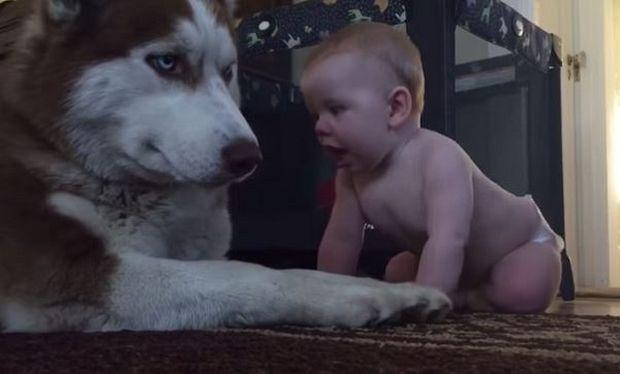 Αυτό το μωρό και το χάσκυ του, έχουν έναν ιδιαίτερο δεσμό. Δείτε τι εννοούμε (βίντεο)