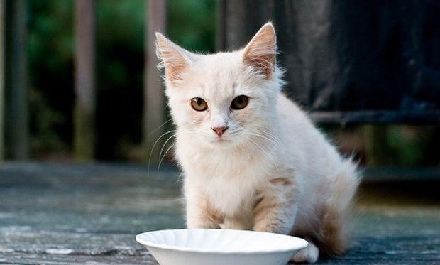 Τεστ: Μάθε τι ράτσα γάτας πρέπει να έχεις ανάλογα με το χαρακτήρα σου!
