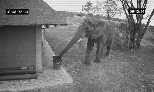 Δεν θα πιστεύετε τι κάνει αυτός ο ελέφαντας! (βίντεο)