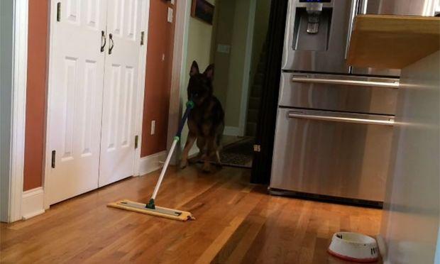 Αυτόν τον σκύλο όλες οι νοικοκυρές θα τον ήθελαν σπίτι! Δείτε γιατί (βίντεο)