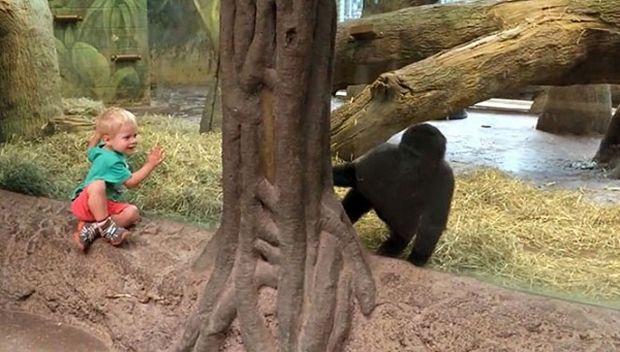 Το είδαμε κι αυτό: Παιδάκι παίζει με…γορίλα! (βίντεο)