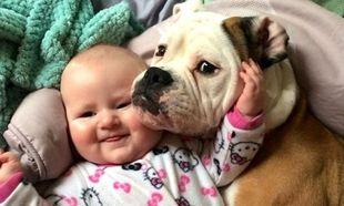 Τεστ: Τι σκυλάκι είναι κατάλληλο για την οικογένειά σου;