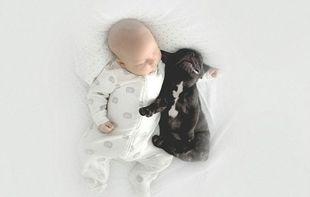 Φανταστικές φωτογραφίες: Μωρό μεγαλώνει με μπουλντόγκ! (εικόνες)