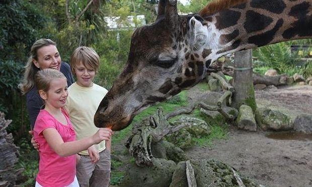 Μικρά και μεγάλα παιδιά επισκέπτονται ένα ζωολογικό πάρκο- Δεν φαντάζεστε τις αντιδράσεις τους (βίντεο)