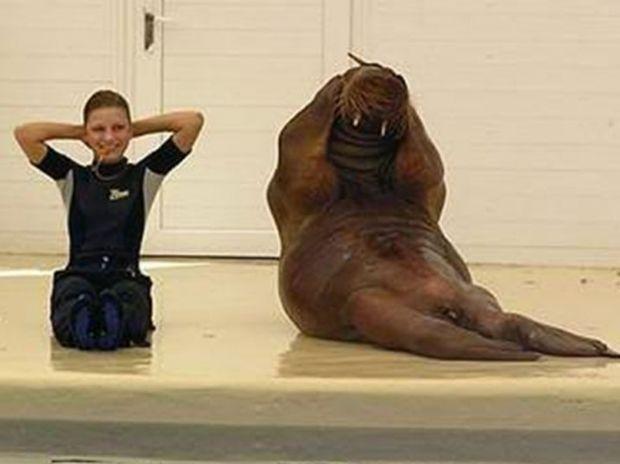 Απίθανο! Αυτός ο θαλάσσιος ίππος θα σας κάνει να γραφτείτε στο γυμναστήριο! (video)