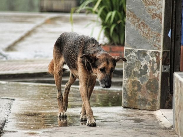 ΣΟΚ! Το βίντεο που κατέγραψε η κρυφή κάμερα ενός αδέσποτου σκυλάκου θα σας κάνει να δακρύσετε!