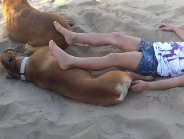Η υπομονή έχει και τα όρια της! Δείτε τι έπαθε το κοριτσάκι που πείραζε αυτόν το σκύλο! (video)