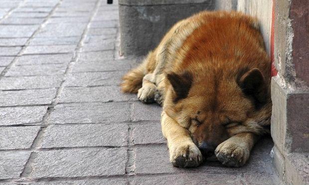 Παγκόσμια Ημέρα Αδέσποτων Ζώων: Γιατί υπάρχουν αδέσποτα;