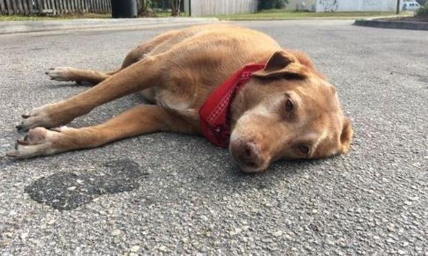Βρήκαν αυτόν τον σκύλο ξαπλωμένο στο δρόμο! Ο λόγος που αρνείται να φύγει από εκεί θα σας κάνει να δακρύσετε!