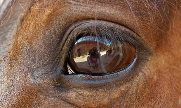 Δείτε τον κόσμο μέσα από τα μάτια μιας «παράξενης παρέας»!