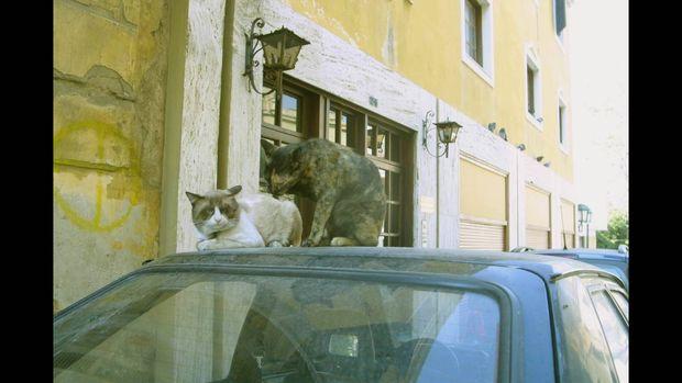 Οι παμπόνηρες γάτες της Ελλάδας