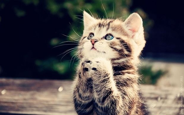 O κτηνίατρος του Mothersblog συμβουλεύει: Το ουροποιητικό σύστημα της γάτας