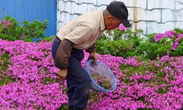 Συγκινητικό: Δείτε για ποιο λόγο ένας άντρας φύτευε λουλούδια επί δύο χρόνια στον κήπο του (βίντεο)