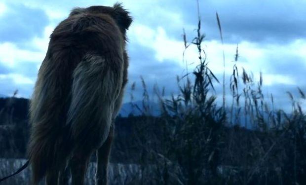 «Η Ομπρέλα», η ταινία μικρού μήκους για την εγκατάλειψη αδέσποτων ζώων που συγκινεί. Δείτε τη!