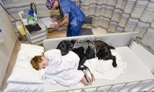 Τόση αγάπη! Σκύλος δεν αφήνει το αυτιστικό παιδί μόνο του ούτε στο νοσοκομείο