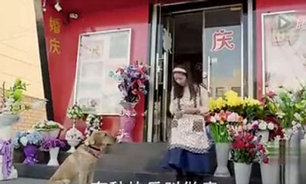 Δεν φαντάζεστε τι θέλει αυτός ο σκύλος- Δείτε το συγκινητικό βίντεο