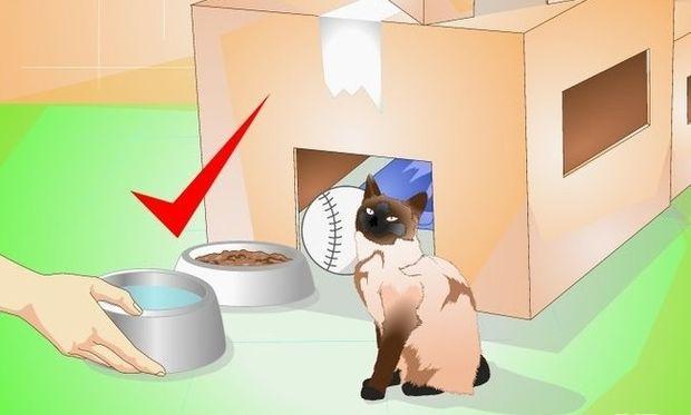 Επειδή ΝΟΙΑΖΕΣΑΙ για τη γάτα σου, φτιάξε της ένα σπίτι μοναδικό!