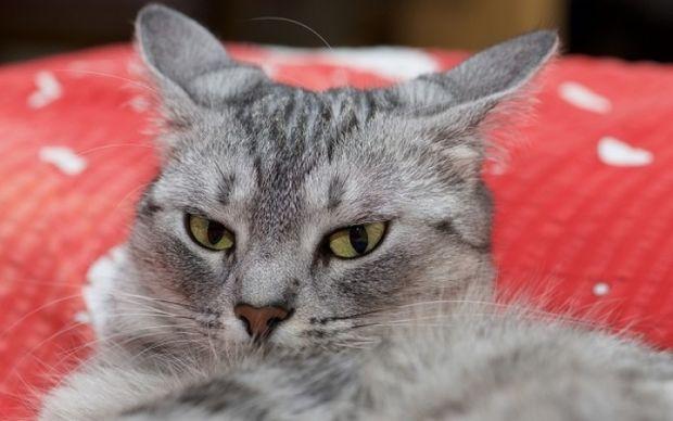 Τοξόπλασμα: Πώς επηρεάζει τη συμπεριφορά το παράσιτο που μεταδίδεται από τις γάτες