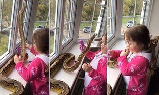 Απίστευτο:Κοριτσάκι 3 ετών παίζει με έναν πύθωνα 2,5 μέτρων! (βίντεο)