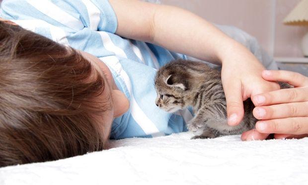 Εγκυμοσύνη γάτας: Πώς θα ενημερώσετε τα παιδιά σας για τα νέα μέλη της οικογένειας