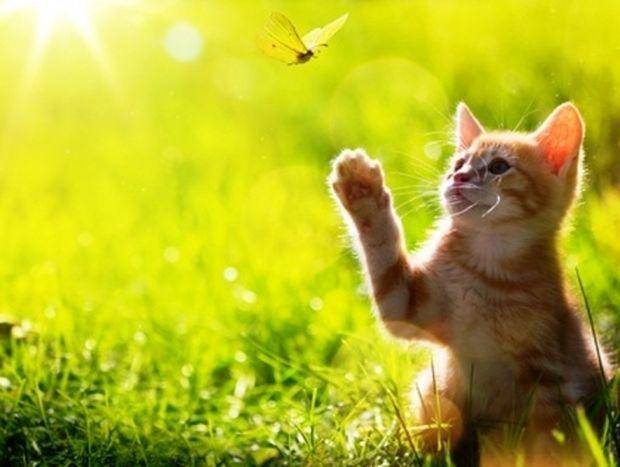 Ετσι πρέπει να ζεις τη ζωή σου σύμφωνα με το ζώδιό σου