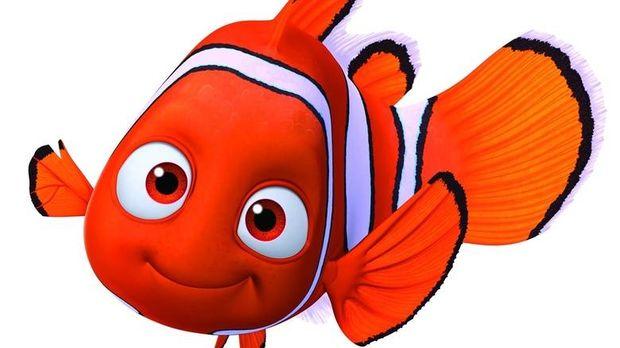 Απειλείται με εξαφάνιση το εξωτικό ψάρι του «Νέμο»