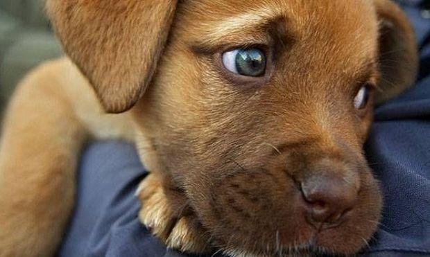«Υιοθέτησε ένα αδέσποτο, μην αγοράζεις»- Πρώτη μεγάλη γιορτή υιοθεσίας αδέσποτων ζώων από 4 φιλοζωικούς συλλόγους