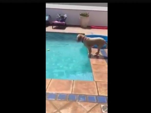Απίστευτο! Δείτε τι σκαρφίστηκε ο σκυλάκος για να πιάσει το μπαλάκι! (video)