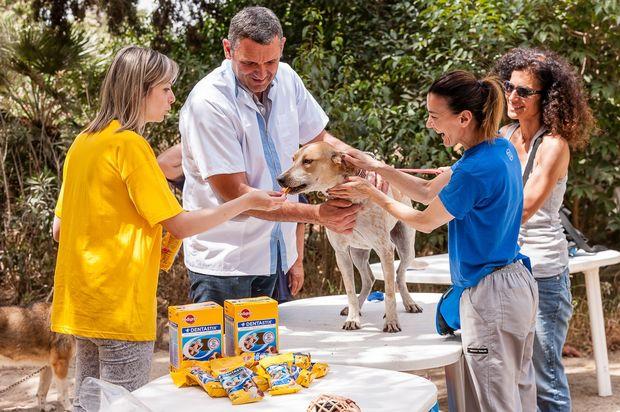 Κτηνίατροι και ιδιοκτήτες σκύλων συμφωνούν:  Η Στοματική Φροντίδα είναι σημαντική!