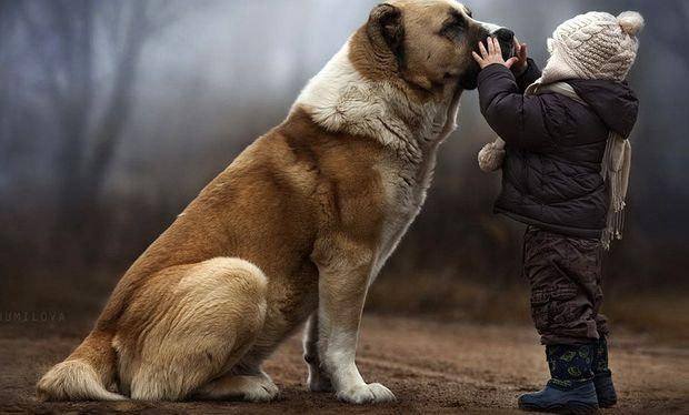 Τι να κάνετε αν ένας σκύλος δαγκώσει το παιδί σας