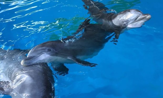 Τέσσερα νέα Δελφίνια από την Φινλανδία χαίρονται τον Αττικό ουρανό για πρώτη φορά, στο Αττικό Ζωολογικό Πάρκο