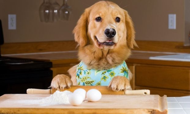 B.A.R.F: Η νέα μόδα στη διατροφή των σκύλων μας
