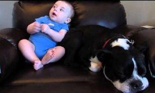 Είναι μαζί με το μωρό στην πολυθρόνα όμως ξαφνικά ο σκύλος φεύγει. Δείτε τον ξεκαρδιστικό λόγο (βίντεο)