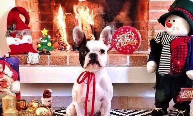 Χριστούγεννα 2016: Σκυλάκια και γάτες φόρεσαν τα γιορτινά τους... το αποτέλεσμα εκπληκτικό