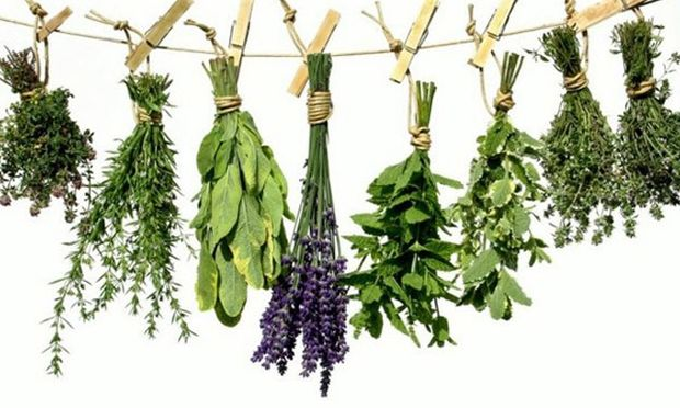 Τα 13 βότανα - σύμμαχοι στην υγεία μας