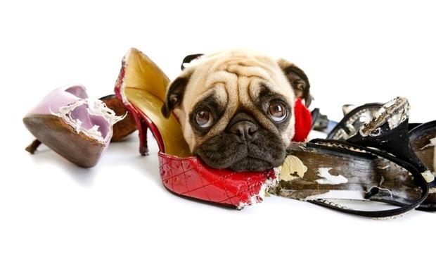 Πώς θα καταλάβετε ότι το σκυλάκι σας πάσχει από άγχος αποχωρισμού