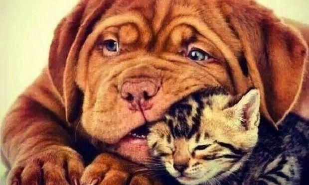 Σκύλος και γάτα μαζί στο σπίτι; Κι όμως...