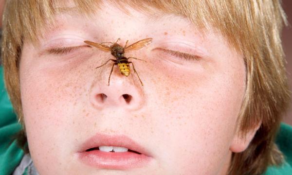 Μήπως το παιδί σας είναι αλλεργικό στις σφήκες ή τις μέλισσες;