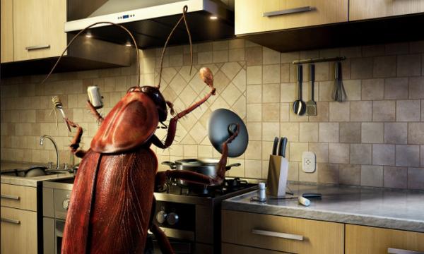 Κατσαρίδες: Απαλλαγείτε από τον απαίσιο «εχθρό» μια και καλή με φυσικούς τρόπους