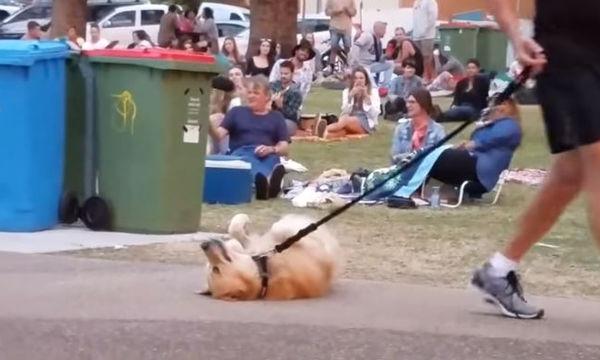 Σκύλος αρνείται να φύγει από το πάρκο και το παίζει «πεθαμένος»