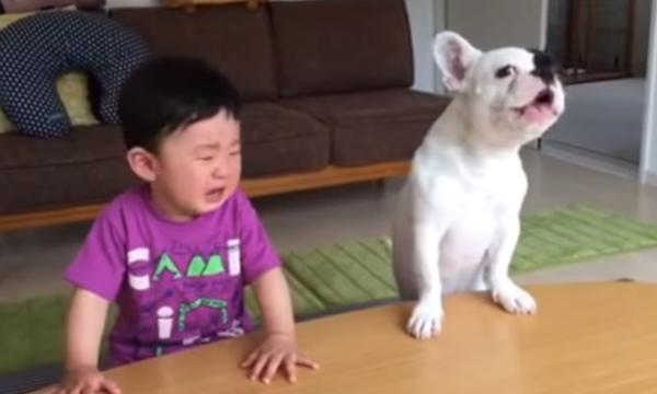 Σκύλος τρώει το φαγητό του μωρού και στο τέλος κλαίει μαζί του
