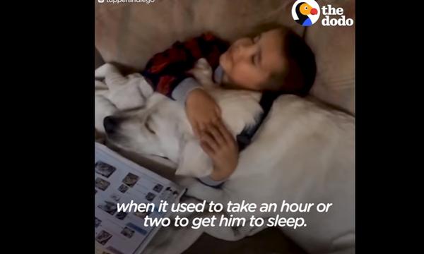 Το πιο συγκινητικό βίντεο: Σκύλος βοηθάει παιδάκι με αυτισμό