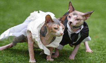 Δύο γάτες «παντρεύτηκαν» και ο λόγος του… γάμου, θα σας ραγίσει την καρδιά